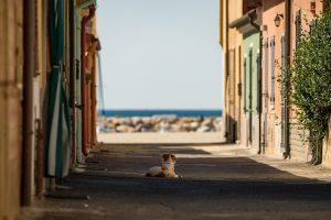 street, dog, sea